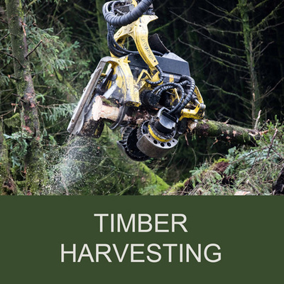 Euroforest Timber Harvesting