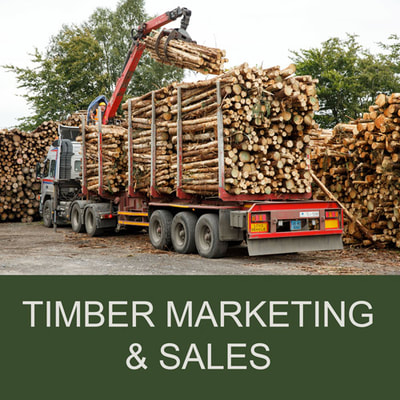 Euroforest Timber Marketing & Sales Ireland
